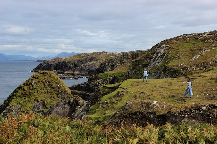 Pied Piper,  Inishbofin.