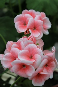 botanicblog12